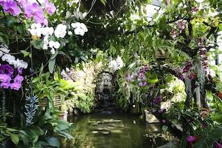 I Giardini la Mortella: una sinfonia floreale a Forio d'ischia