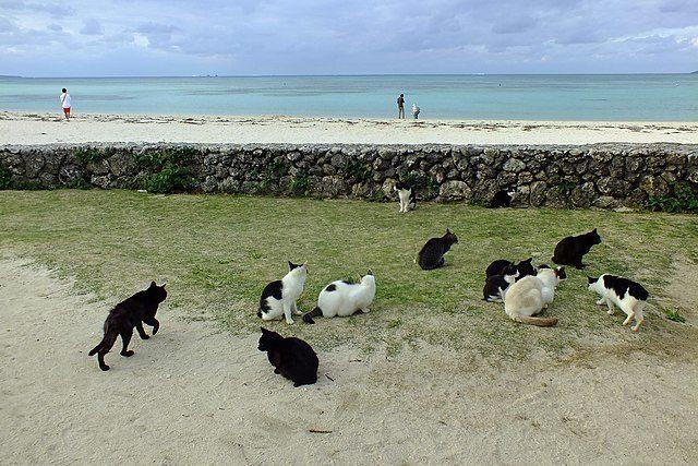 La colonia felina di Kondoi Beach – Foto Wikimedia Commons