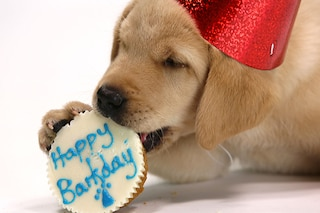 'Happy Birthday' da oggi è diventata di tutti
