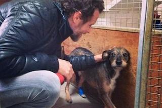 Jovanotti, il Babbo Natale di cani e gatti, dona 23 quintali di crocchette e cibo umido al canile