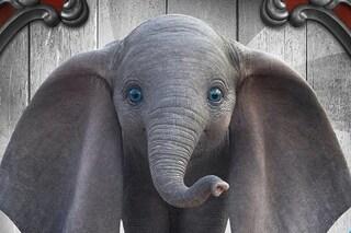 """Dumbo, gli Arcade Fire rifanno """"Baby Mine"""", presente nella versione originale del classico Disney"""
