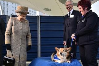 È morto Whisper, il cane della Regina Elisabetta II