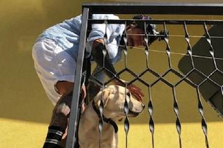 Vittorio Brumotti salva un cane lasciato al sole, l'inviato si arrampica su un balcone