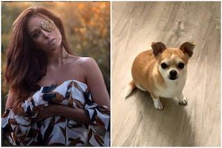 """Gessica Notaro piange il suo cagnolino: """"Buona vita mio piccolo grande Ziggy"""""""