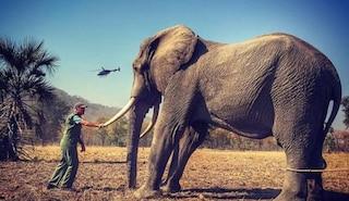 """Harry Windsor perde la causa contro il Mail per la foto dell'elefante legato: """"La foto è vera"""""""