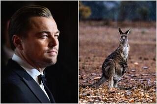 Leonardo DiCaprio in soccorso dell'Australia, dona 3 milioni di dollari per salvarla dai roghi