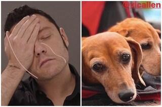 """Tiziano Ferro, addio alla sua cagnolina Piper: """"Ciao Piperina, quanto amore ci hai dato"""""""