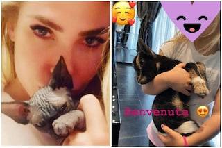 Ilary Blasi amante degli animali, dopo il gatto Donna Paola arriva anche una capretta