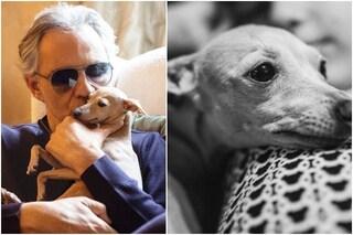 """Andrea Bocelli dice addio al suo cane disperso in mare: """"Continuerà a giocare nel nostro cuore"""""""