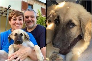 """Benedetta Rossi, dopo la morte di Nuvola adotta un nuovo cane: """"Benvenuto piccolo Cloud"""""""