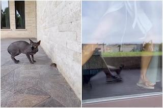 Il gatto di Ilary Blasi porta un topo in casa, l'esilarante fuga della moglie di Francesco Totti