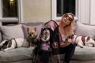 I cani di Lady Gaga stanno bene e sono tornati a casa sani e salvi