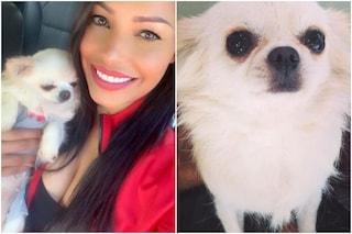 """Carolina Marconi ha perso il suo cane: """"Aiutatemi a ritrovare Zora. È la mia vita, sto malissimo"""""""