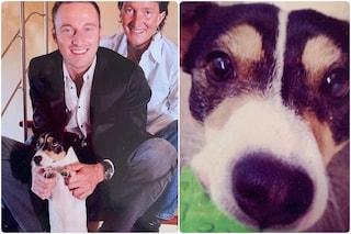 """Morto Ardi, il cane di Francesco Facchinetti: """"Grazie per avere protetto i miei figli"""""""