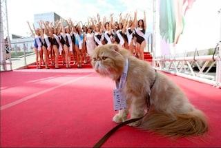 Miss Italia 2017, il gatto Yoda al fianco di Facchinetti con la voce di Francesco Pannofino