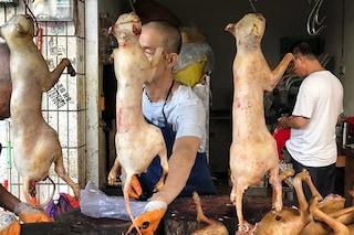 """""""Le inviate ridono mentre i cani vengono torturati"""", Elisabetta Franchi attacca Le Iene per Yulin"""