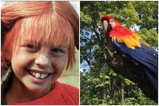 È morto Rosalinda, il pappagallo della serie tv Pippi Calzelunghe aveva 51 anni