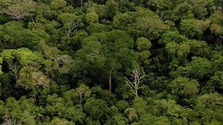 """""""Amazzonia Selvaggia"""", su NatGeo Wild uno speciale sul polmone del mondo che sta bruciando"""