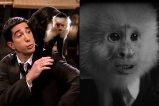 "La scimmietta di ""What Did Jack Do?"" di David Lynch è Marcel, la stessa di ""Friends"""