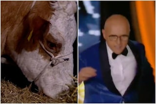Una mucca in studio al GFVip, Alfonso Signorini scappa terrorizzato