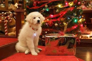 """Le 5 cose di """"Zampa e la magia del Natale"""" che ancora non sapevate"""