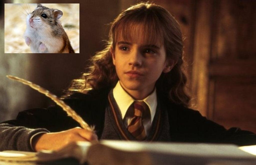Harry Potter Camera Dei Segreti : Galleria fotografica harry potter e la camera dei segreti mymovies