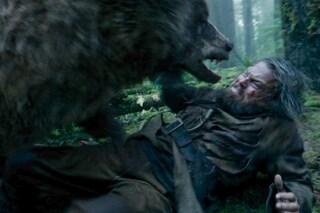 """""""Leonardo DiCaprio violentato da un orso in una scena di Revenant"""", ma la Fox smentisce"""