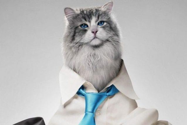 """""""Una vita da gatto"""", Kevin Spacey intrappolato nel corpo di un felino"""