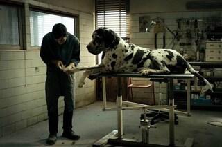 Dogman è il film italiano che verrà candidato agli Oscar 2019