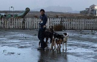 """""""Dogman"""" di Matteo Garrone fuori dagli Oscar 2018, resta la magra consolazione Luca Guadagnino"""