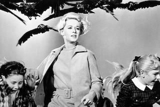 """""""Gli Uccelli"""" torna in sala, il capolavoro di Alfred Hitchcock in versione restaurata"""