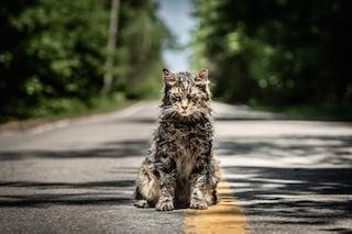 """Arriva il remake """"Pet Sematary"""", il cimitero vivente di Stephen King nelle sale dal 9 maggio"""