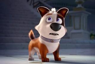 Tappo – Cucciolo in un mare di guai: trama, trailer e curiosità dell'atteso film d'animazione