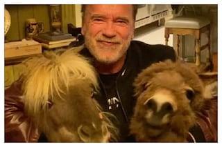 """Arnold Schwarzenegger in isolamento con pony e asino: """"Ascoltate gli esperti e non gli idioti"""""""