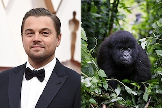 Leonardo DiCaprio per l'Africa dona 2 milioni di dollari per il parco del Virunga