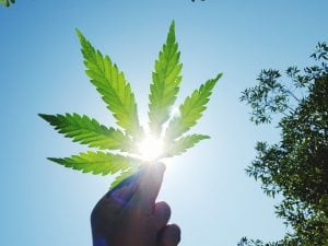 Hemp Act Store, la rivoluzione della Cannabis Light