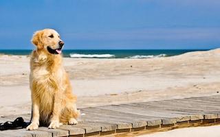 """Fiumicino, sospeso dai giudici l'ingresso libero dei cani in spiaggia: """"Non è obbligo, ma facoltà"""""""