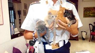 Roma, vigili salvano una colonia di 15 gattini