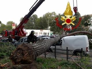 Maltempo a Roma, alberi caduti a Grottarossa e Tor Cervara: traffico in tilt e strade chiuse