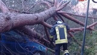 Maltempo su Roma: cade un albero e ferisce una donna nella sua auto