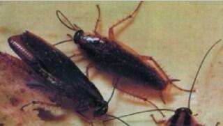 Garbatella, chiuso un ristorante: nel magazzino dei cibi c'erano gli scarafaggi