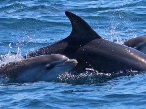 Foto di Oceanomare Delphis Onlus
