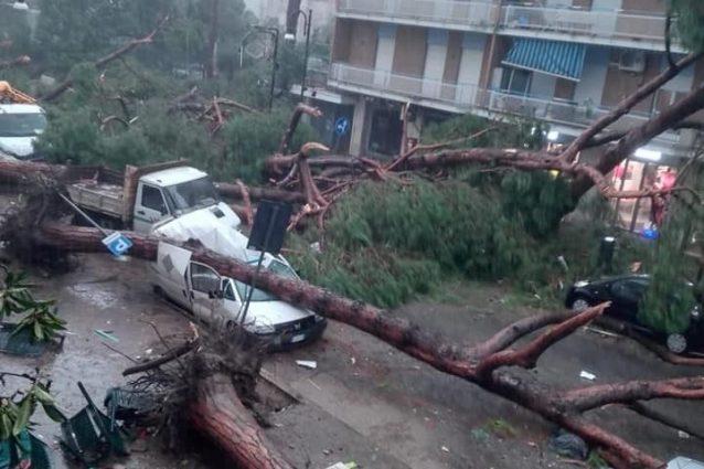 Praticamente tutti gli alberi di viale delle Vittorie sono crollati