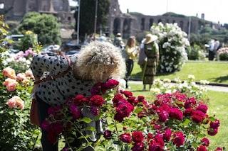 Riapre per la fioritura autunnale il Roseto di Roma: orari e informazioni per visitarlo