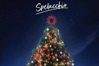 Spelacchio è tornato: il nuovo Albero di Natale di Roma si chiamerà come il suo triste predecessore