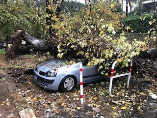 """Roma, albero cade su un'auto in zona piazza Bologna. I residenti: """"Poteva finire in tragedia"""""""