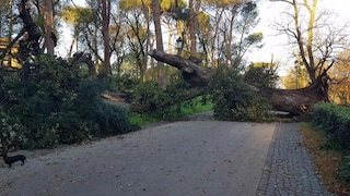 Montelibretti, 58enne muore schiacciato dalla quercia che stava provando a tagliare