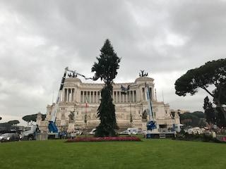 """""""Spelacchio is back"""", iniziati i lavori in Piazza Venezia a Roma"""