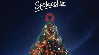 Roma, l'albero di Natale Spelacchio arriva questa notte: da domani inizia l'allestimento