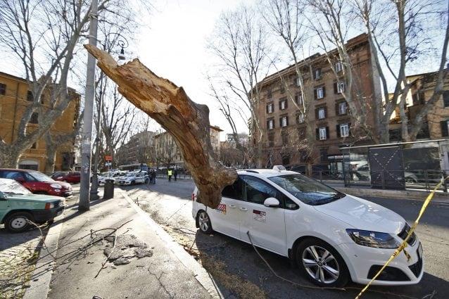 Lo scorso sabato un albero è caduto su un taxi in viale Trastevere a Roma
